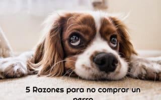 perro-con-la-cabeza-en-el-suelo-y-mirada-triste