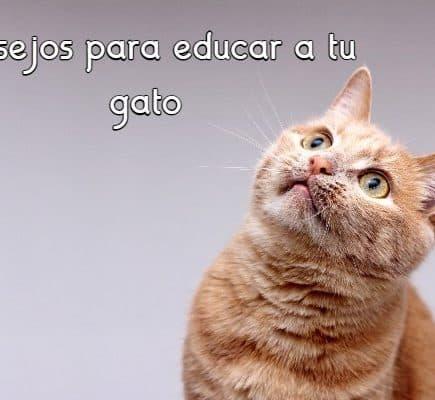 Consejos para educar a tu gato