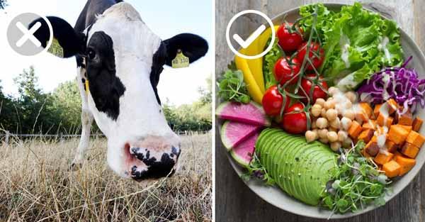 por que debemos consumir menos carne
